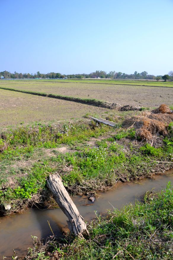 Bruggetjes tussen de rijstvelden