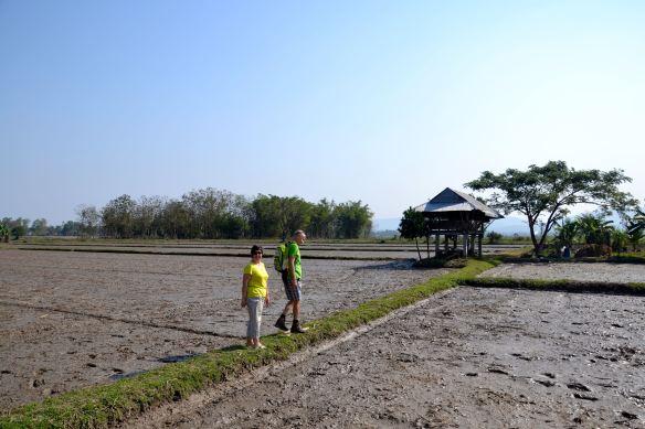 Wandelen tussen de rijstvelden