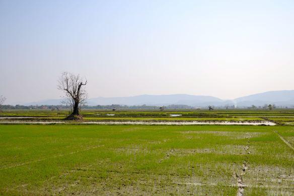 Landschap met rijstvelden